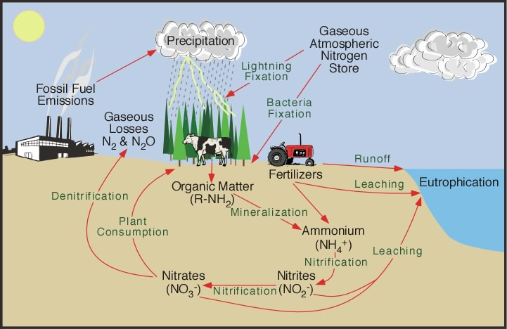 Nutrient cycle invention by mankind destruction of earth nitrogen cycle ccuart Images